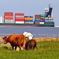 Symbolfoto: Freihandelsabkommen und Tierschutz.