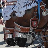 Symbolfoto: Brauereipferde auf dem Oktoberfest in München.