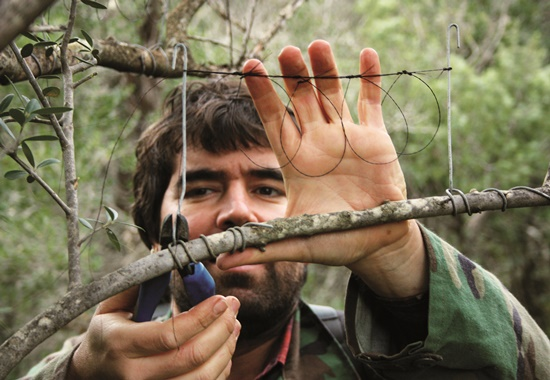 Glück gehabt: Ein Helfer schneidet eine Vogelfalle vom Baum.