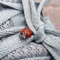 Ein Marienkäfer auf einem Schuh.