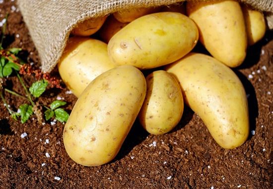Kartoffeln sind eine wesentliche Quelle für Vitamine und Mineralstoffe wie Eisen, Zink und Magnesium und enthalten auch Vitamin C und Kalium.