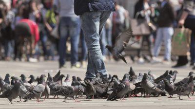 Tauben in der Stadt.