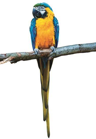 Ein Papagei im Tierschutzzentrum Weidefeld.