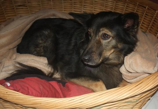 Der Tierschutzverein bietet jedem Hund einen kuscheligen und warmen Platz über Nacht.