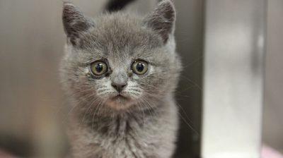 Das Tierheim Feucht kümmert sich um diesen und 26 andere Katzenwelpen aus einem illegalen Transport.