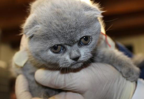 Die Katzenwelpen waren alle dehydriert und unterernährt. Derzeit untersucht der Tierarzt die Katzen auf weitere Krankheiten.