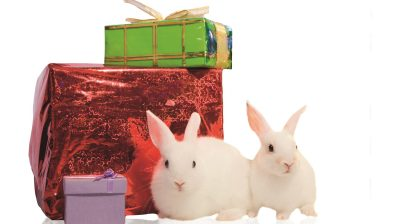Eben noch als Geschenk unter dem Weihnachstbaum, fristen Kaninchen nach der ersten Euphorie oft schnell ein trauriges Dasein oder landen im Tierheim.
