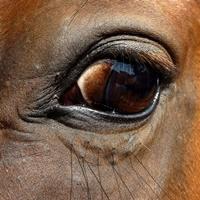 Symbolfoto: Pferdeauge.