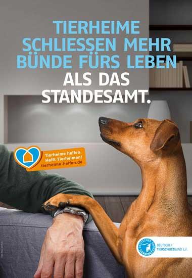 tierheim-motiv_hund-standesamt_dudt_4_16_artikelbild