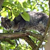 Symbolfoto: Eine frei lebende Katze.