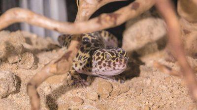 Die ersten Exoten sind in die neue Reptilienstation im Tier-, Natur- und Jugendzentrum Weidefeld des Deutschen Tierschutzbundes eingezogen.