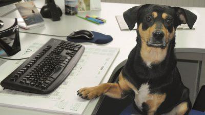 Kollege Hund im Büro – Echte Liebe auf vier Pfoten.