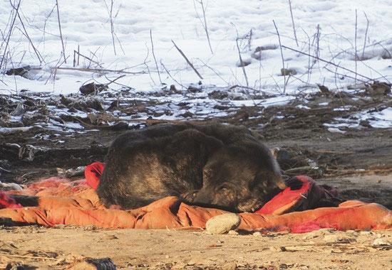 Die Tierschützer kümmern sich um die Straßenhunde vor Ort. Diesem Hund haben sie das Leben gerettet.