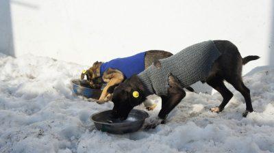 Die Mitarbeiter im Tierschutzzentrum Odessa kümmern sich um die Straßenhunde vor Ort.