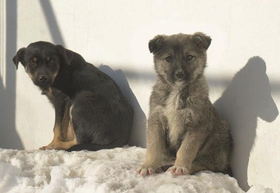 Zwei Welpen im Tierschutzzentrum Odessa. Die Tierschützer kümmern sich um die Straßenhunde vor Ort.