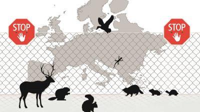 """37 Tier- und Pflanzenarten stehen auf der ersten """"Liste der invasiven Arten"""" – sie sind unerwünscht in der EU. Das hat vor allem für Tierheime und Auffangstationen einen bitteren Beigeschmack."""