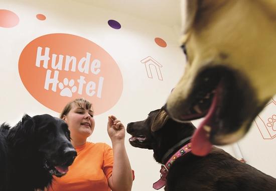 In der Hundepension sind die Vierbeiner die Nummer eins und freuen sich über Leckerchen.