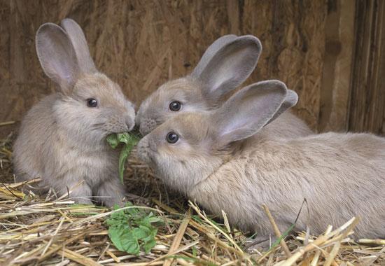 Auch Kaninchen müssen während der Abwesenheit der Tierhalter umsorgt und gefüttert werden.