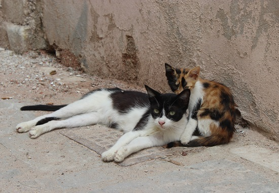 Eine Straßenkatze zusammen mit ihrem Katzenbaby.