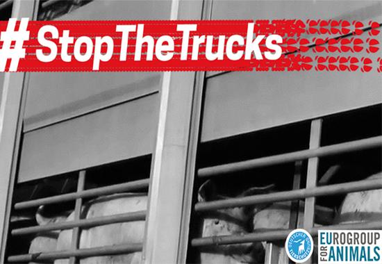 Endlich bessere Transportbedingungen für Tiere – das fordert der Deutsche Tierschutzbund gemeinsam mit der Eurogroup for Animals.