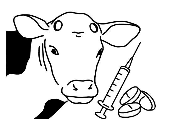 Die Enthornung von Kälbern ist beim Tierschutzlabel in beiden Stufen nur unter Sedation, Lokalanästhesie und Schmerzmittelgabe erlaubt.