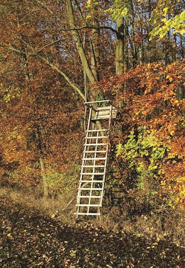 Hochsitze sind häufig in unseren Wäldern zu sehen.
