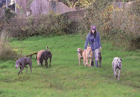 """Im """"Avalon"""", dem ersten und bislang größten Sanctuary für Greyhounds in Irland, päppelt Pro Animale die Hunde wieder liebevoll auf."""