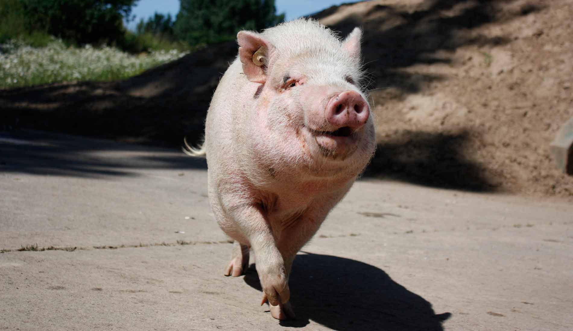 Im Tierschutzzentrum Weidefeld geben wir Tieren wie Herr Bert ein artgerechtes Zuhause. Helfen Sie mit: Werden Sie Projektpate!