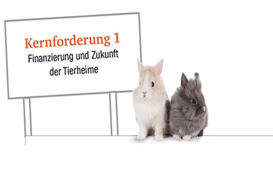 Kaninchen halten die Kernforderung 1 hoch