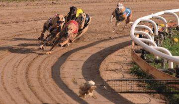 Hinter der strahlenden Renn-Atmosphäre stecken Machenschaften, die einen fassungslos machen, denn die Greyhounds sind wertlos, wenn sie nicht gewinnen.