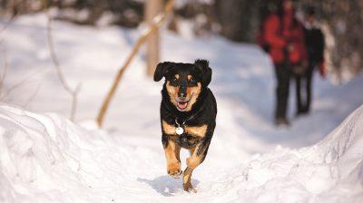 Hunde lieben Schnee. Nun ist es am Halter, Hund und Katze im Winter besonders zu schützen.