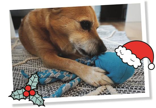 Die selbstgebastelte Sockenkrake bietet eine schöne Beschäftigung für Hunde.