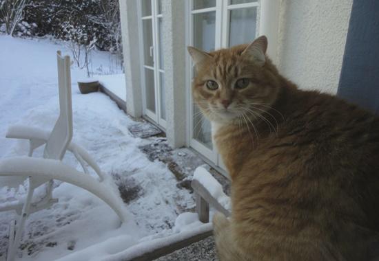 Katzen sind von Schnee im Winter nicht immer begeistert.