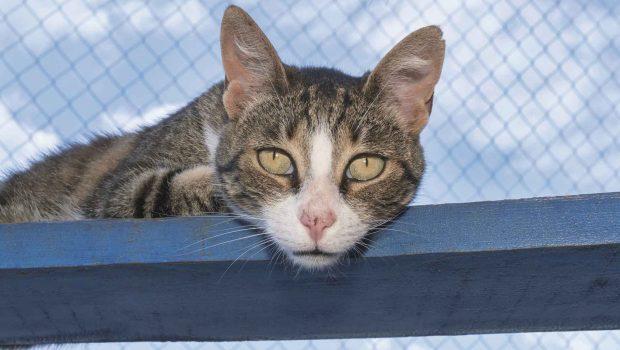 Nachdem die Hunde-Population in Odessa durch Kastrationen nach 16 Jahren kontinuierlich und tierschutzgerecht zurückgegangen ist, konzentiert sich der Deutsche Tierschutzbund verstärkt auf Straßenkatzen.