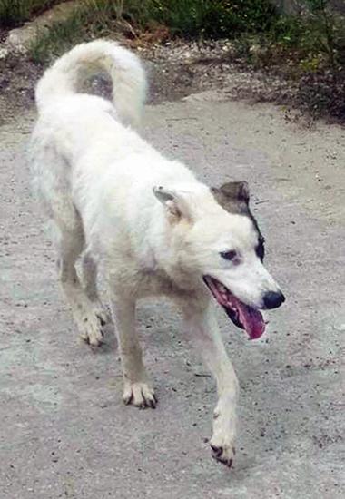 Hund Joey war 27 Stunden auf Achse, bis er endlich wiedergefunden wurde.