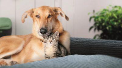 Seit mehr als 35 Jahren hilft der Deutsche Tierschutzbund, verloren gegangene Haustiere wiederzufinden – mit FINDEFIX, dem kostenlosen Haustierregister des Verbandes.