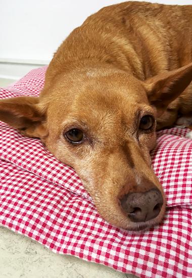 """""""Für uns war Fina von Anfang an der perfekte Hund. Besonders im Alter ist es so schön, ein eingespieltes Team zu sein. Zu wissen, was der andere als Nächstes tun wird, und sich ohne Worte zu verständigen"""", so Dr. Henriette Mackensen."""