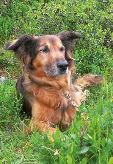 """""""Nello ist ein sehr menschenbezogener Hund, der niemandem zur Last fallen und immer allen gefallen will"""", so Andrea Furler-Mihali."""