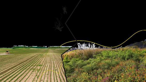 Landwirtschaftlich intensiv genutzte Flächen führen im Gegensatz zu ursprünglich belassenen Wiesen unter anderem dazu, dass die Anzahl der Fluginsekten schrumpft.