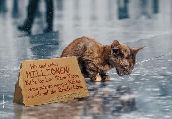 Motiv der Katzenschutz-Kampagne.