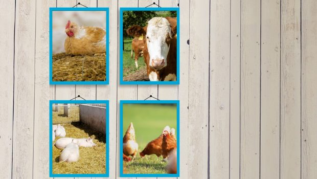 Das zweistufige Tierschutzlabel des Deutschen Tierschutzbundes überzeugt – seit nunmehr fünf Jahren ist es auf dem Markt. Zeit, eine Bilanz zu ziehen.