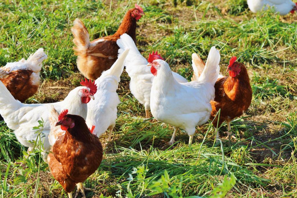 Dank des Tierschutzplans könnten sich Haltungsbedingungen bald verbessern.