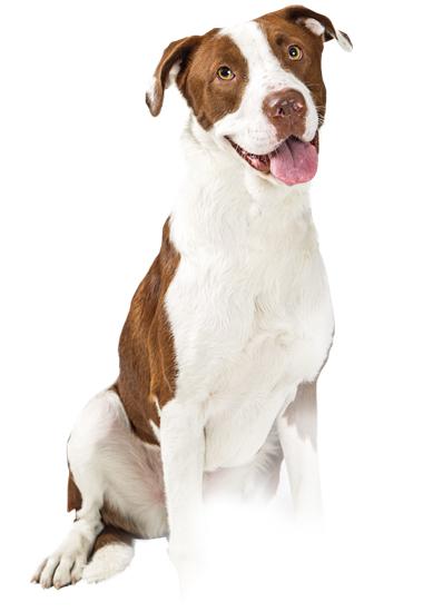 Ein Hund verschwindet. #registrierdeintier