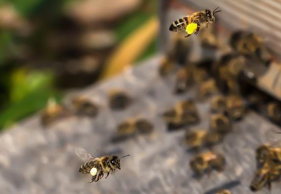 Ein Bienenvolk besteht aus etwa 20.000 Bienen.