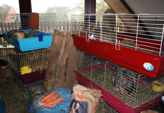 Dutzende Kaninchen in Käfigen bei einem Fall von Animal Hoarding