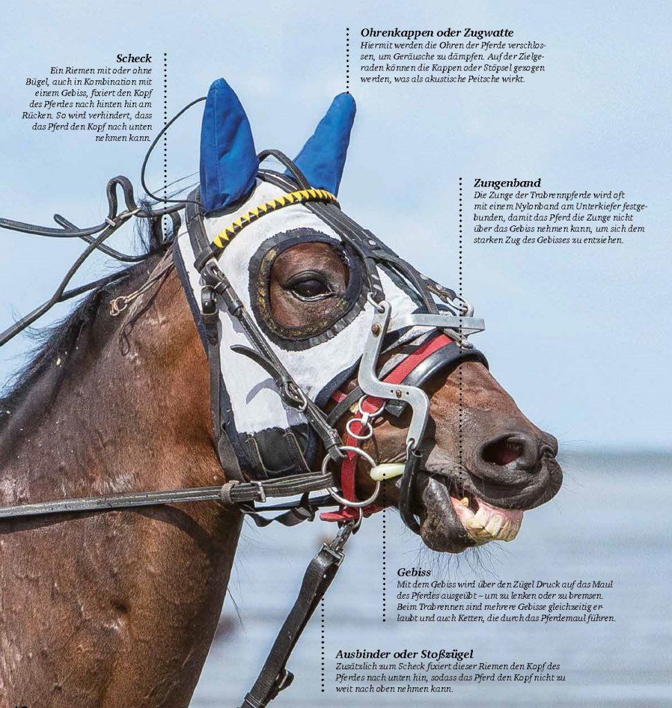 Angeblich sollen die Ausrüstungsgegenstände die Pferde beim Trabrennen schützen. In Wirklichkeit zwingen Sportler die Tiere mit tierschutzwidrigem Zubehör auf brutale Art und Weise zu mehr Gehorsam und Schnelligkeit.