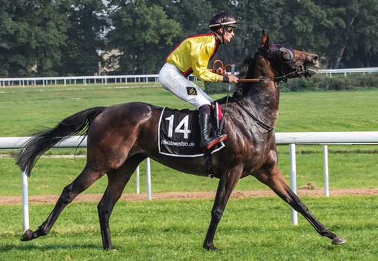 Jockey und Pferd beim Pferderennsport