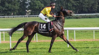 Pferd und Jockey beim Pferderennsport