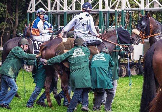 Sieben Starthelfer und eine Maske über den Augen sind hier nötig, um das ängstliche Pferd vor dem anstehenden Galopprennen in die Startmaschine zu zwängen.
