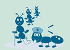 Ameisen verarzten sich gegenseitig.